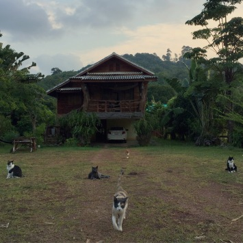 a-home-with-cats-koh-lanta-oct-16