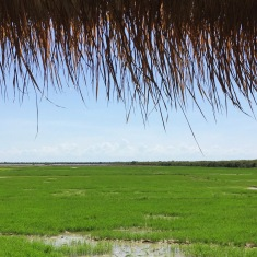 rice-paddy-relaxation-siem-reap-cambodia